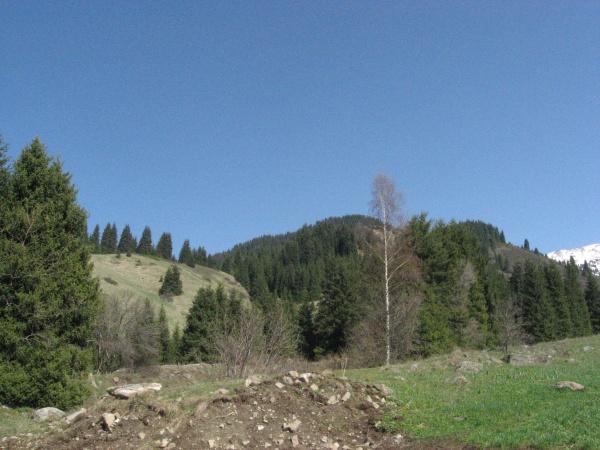 Весна в ущелье Казачки