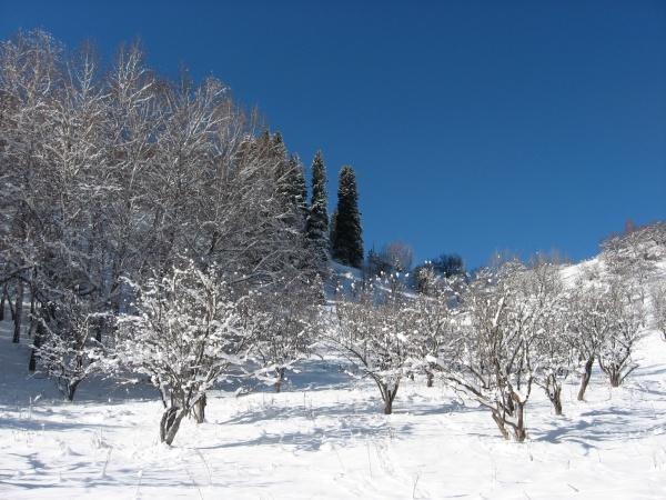 Первый подъем на Кок Жайляу через яблоневый сад