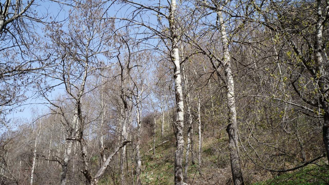 Весна в Бутаковском ущелье