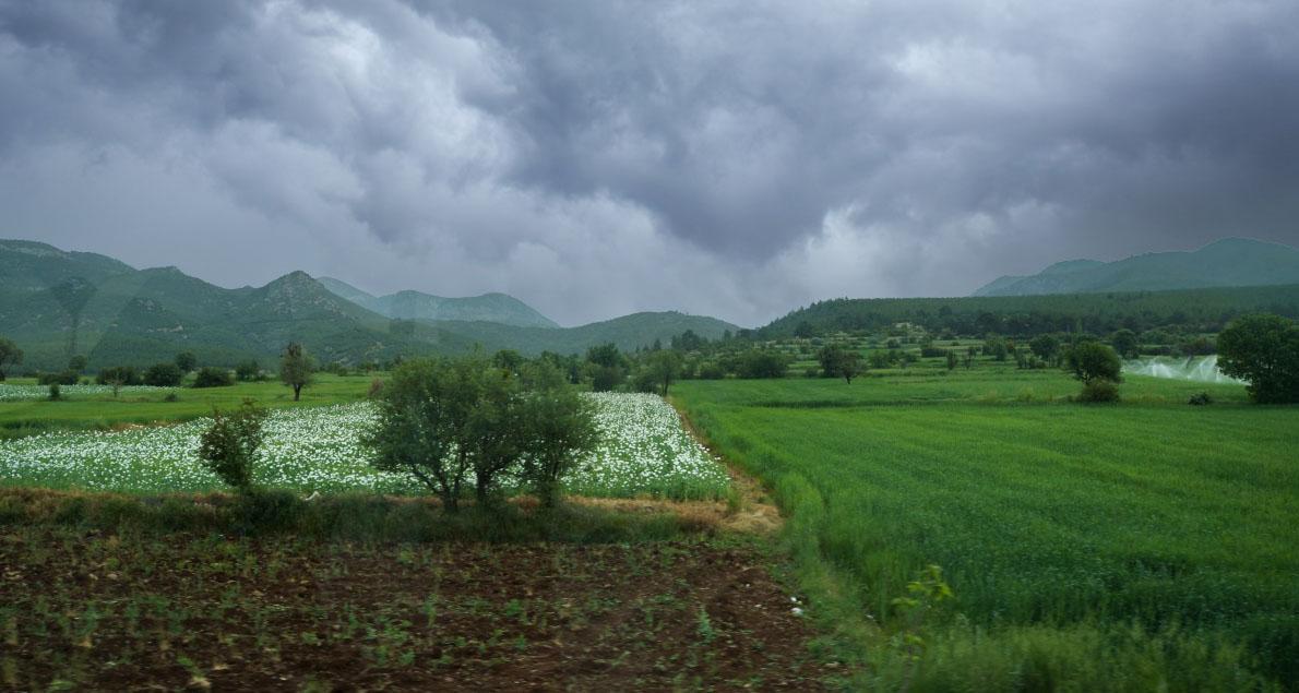 Маковые поля по дороге в Памуккале