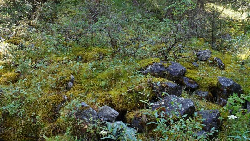 Мох в Тургеньском ущелье