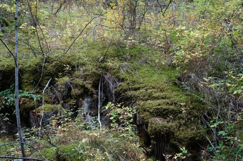 Мох в Чинтургенском ущелье