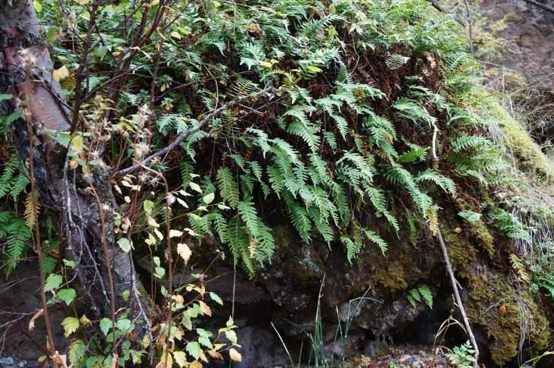 В Чинтургенском ущелье