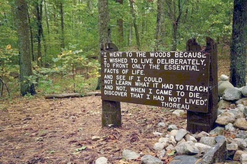 """""""Я ушел в лес потому, что хотел жить разумно, иметь дело лишь с важнейшими фактами жизни и попробовать чему-то от нее научиться, чтобы не оказалось перед смертью, что я вовсе и не жил."""""""