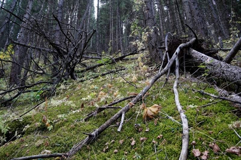 Дремучий лес на пути к Казачьим озерам