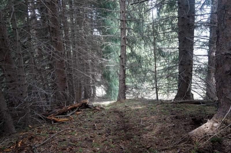 Дремучий лес на спуске с седловины у горы Смотровой