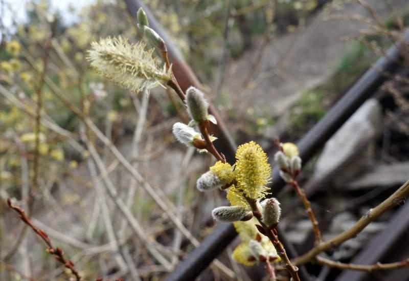 Весна в горах Заилийского Алатау