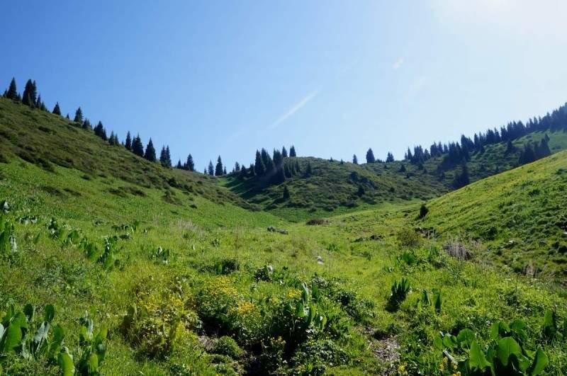 Перевал Лесной 2250 м н.к.