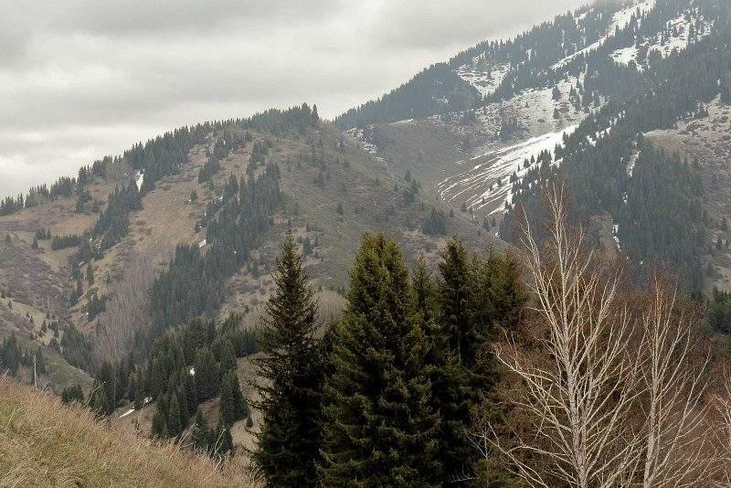 Перевал Лесной