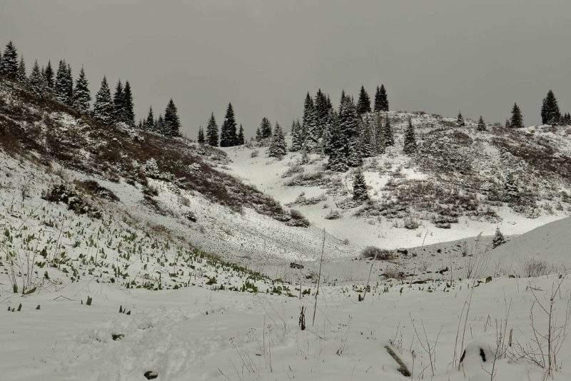 Перевал Лесной 2250м