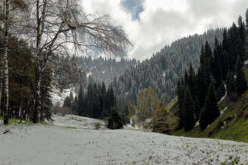 Вид на перевал лесной со стороны ущелья Котырбулак