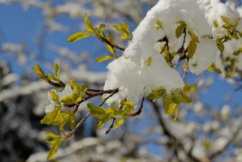 Весна в Заилийском Алатау