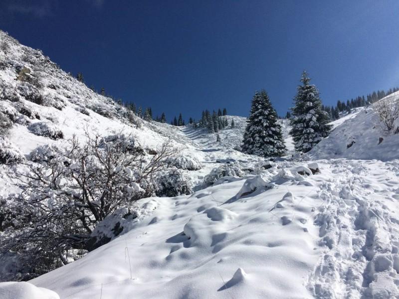 Перевал Лесной 2250 м