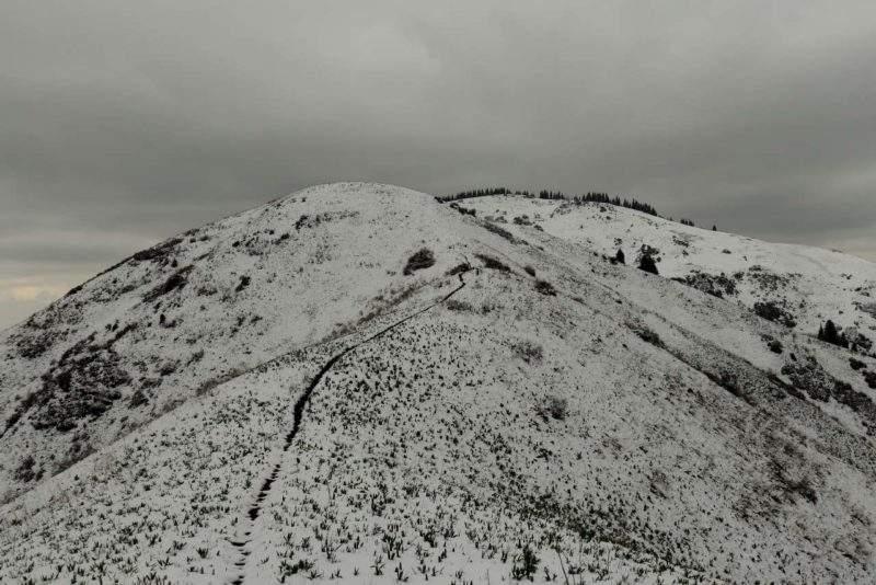 Волчья гора