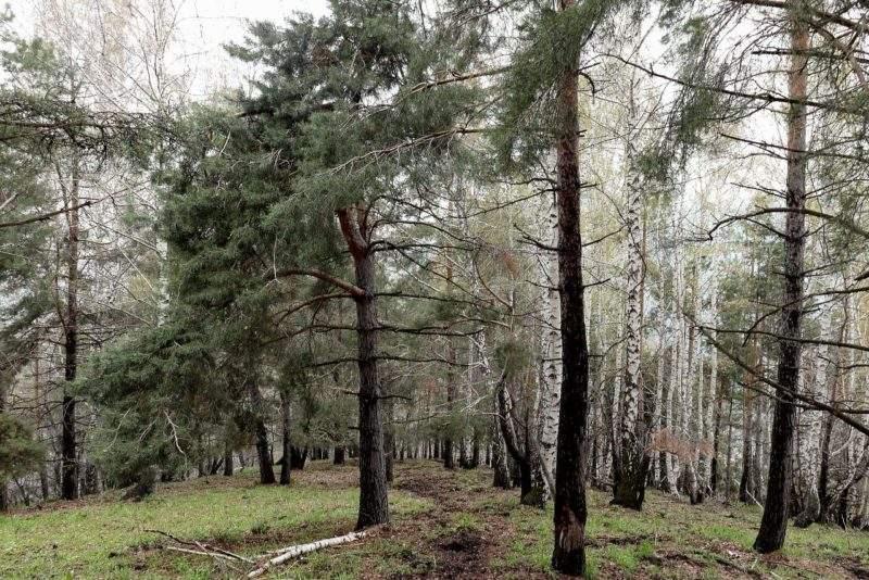 Смешанный лес в Заилийском Алатау