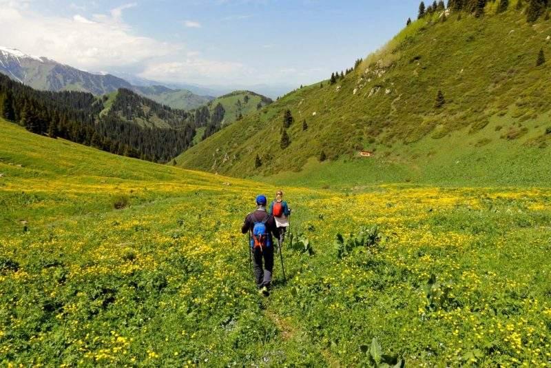 Лютики на спуске с Лесного перевала