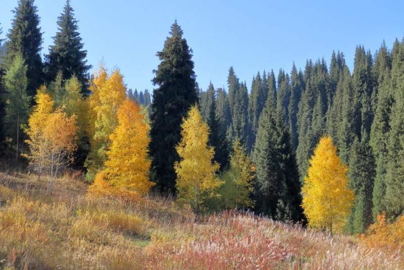Золотая осень в горах Заилийского Алатау