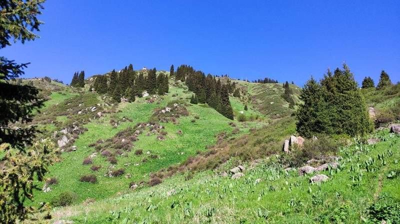 Гора Горелка (2605 м) в Горельнике