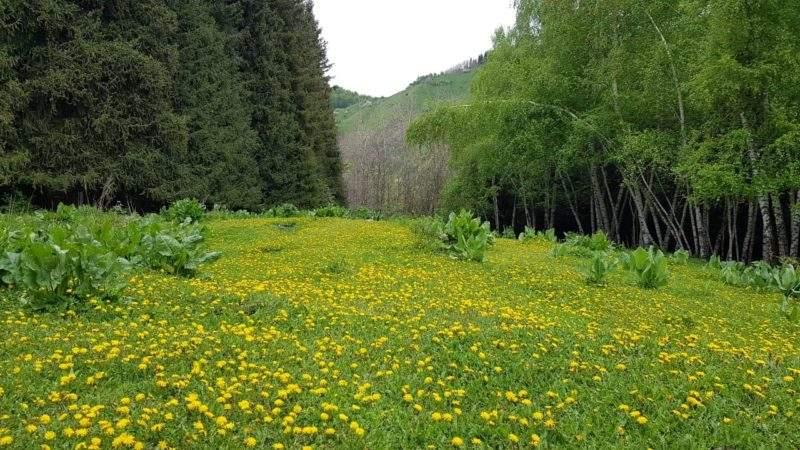 Заилийский Алатау весной