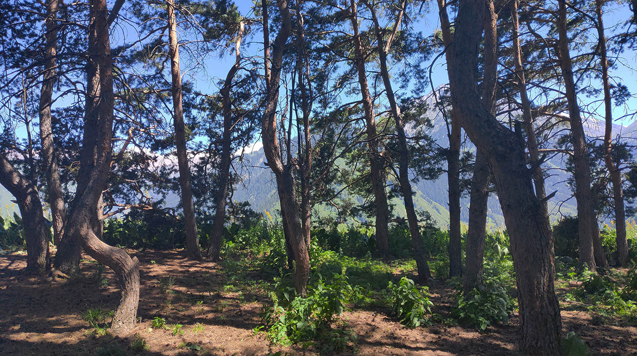 В горах Заилийского Алатау