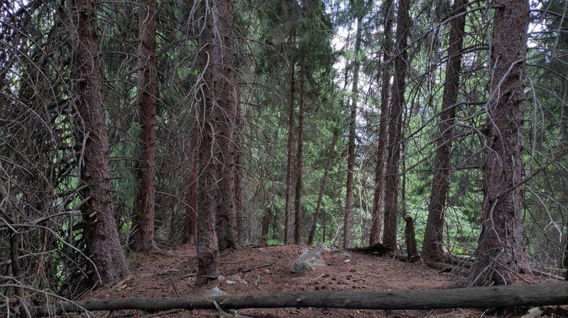 В горном лесу