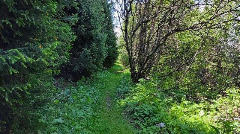 Дорога в горном лесу