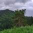 Гора Смотровая